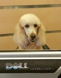 German Car Depot | Volkswagen, Audi Specialists - LuLu says come on down to the Depot ,German Car Depot 